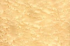 genoest-vogeloog